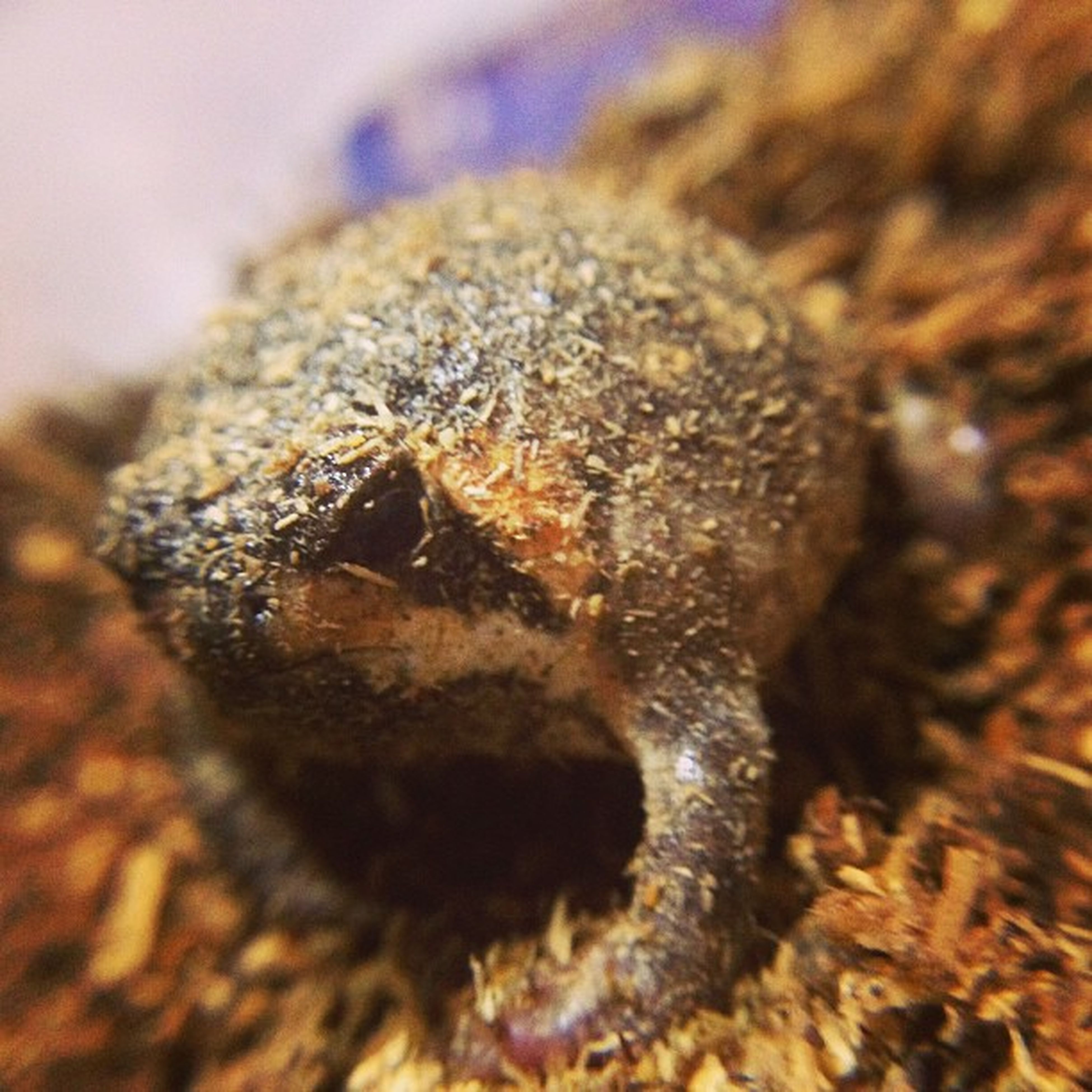 animal themes, one animal, animals in the wild, wildlife, insect, close-up, selective focus, focus on foreground, animal body part, nature, zoology, extreme close-up, brown, outdoors, no people, textured, day, macro, detail, animal eye