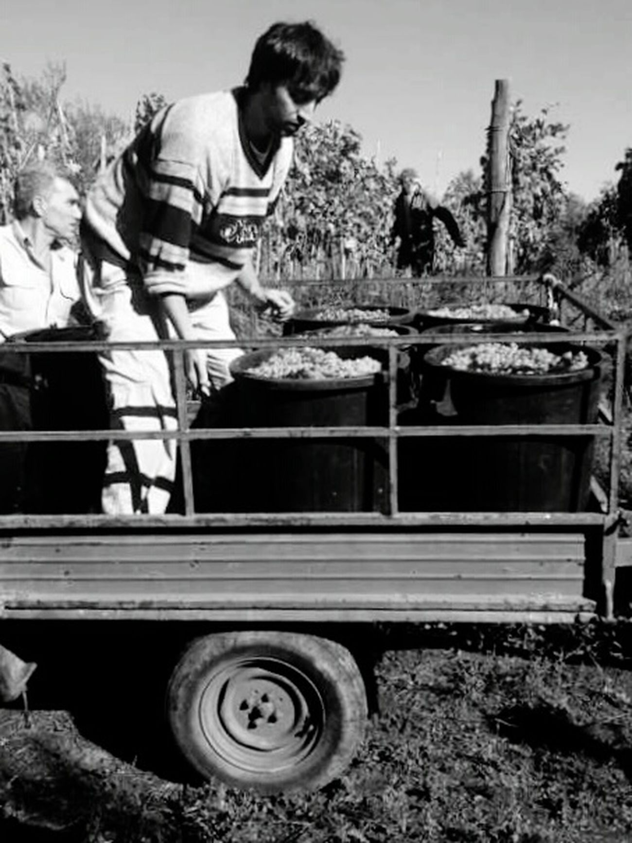 Collected Community Vendemmia Family Atwork