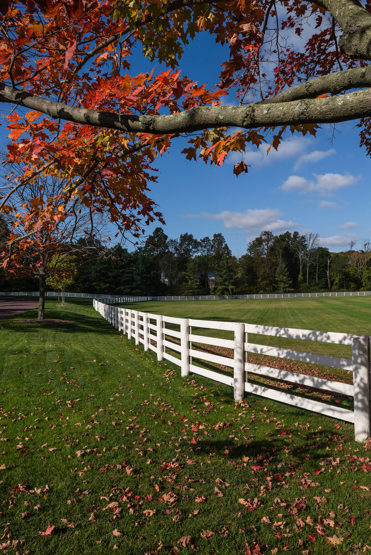 Colors Of Autumn Country Club Country Life Countryside Fall Colors Foliage Greenwich, CT USA USAtrip White Fence