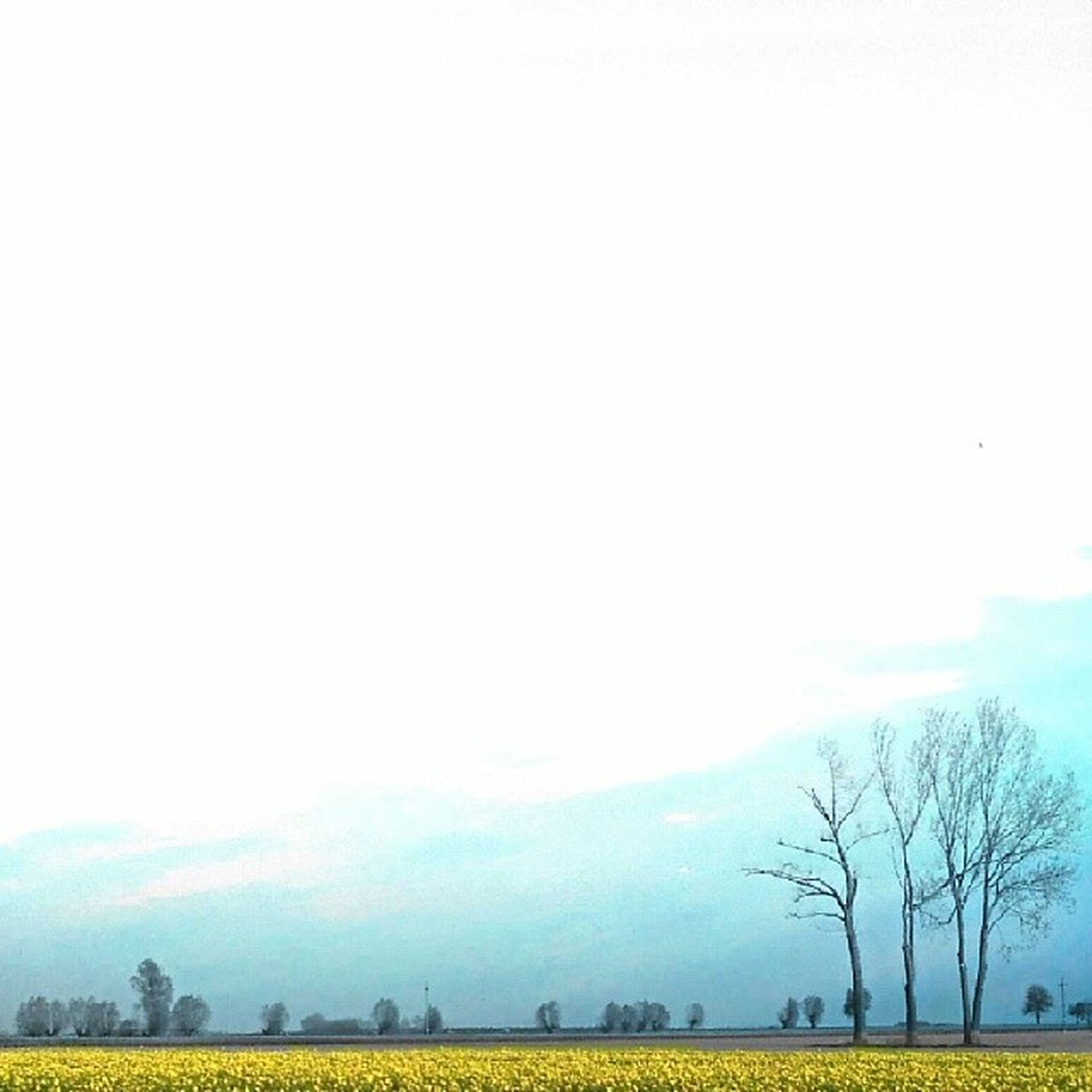 tree, field, landscape, bare tree, tranquil scene, tranquility, grass, sky, beauty in nature, scenics, nature, copy space, clear sky, growth, built structure, building exterior, outdoors, no people, day, architecture