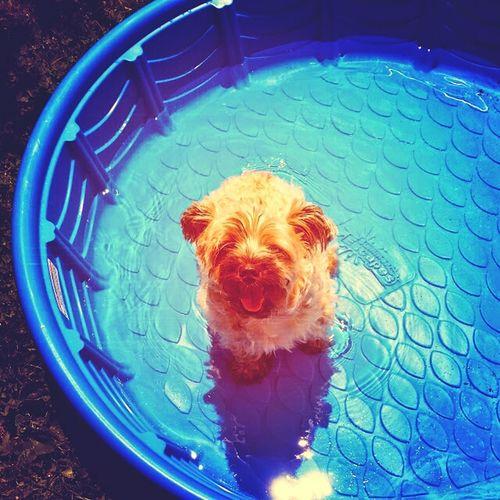 Fluffy butt Donovan. Puppy Donovan Keepincool Fluffy