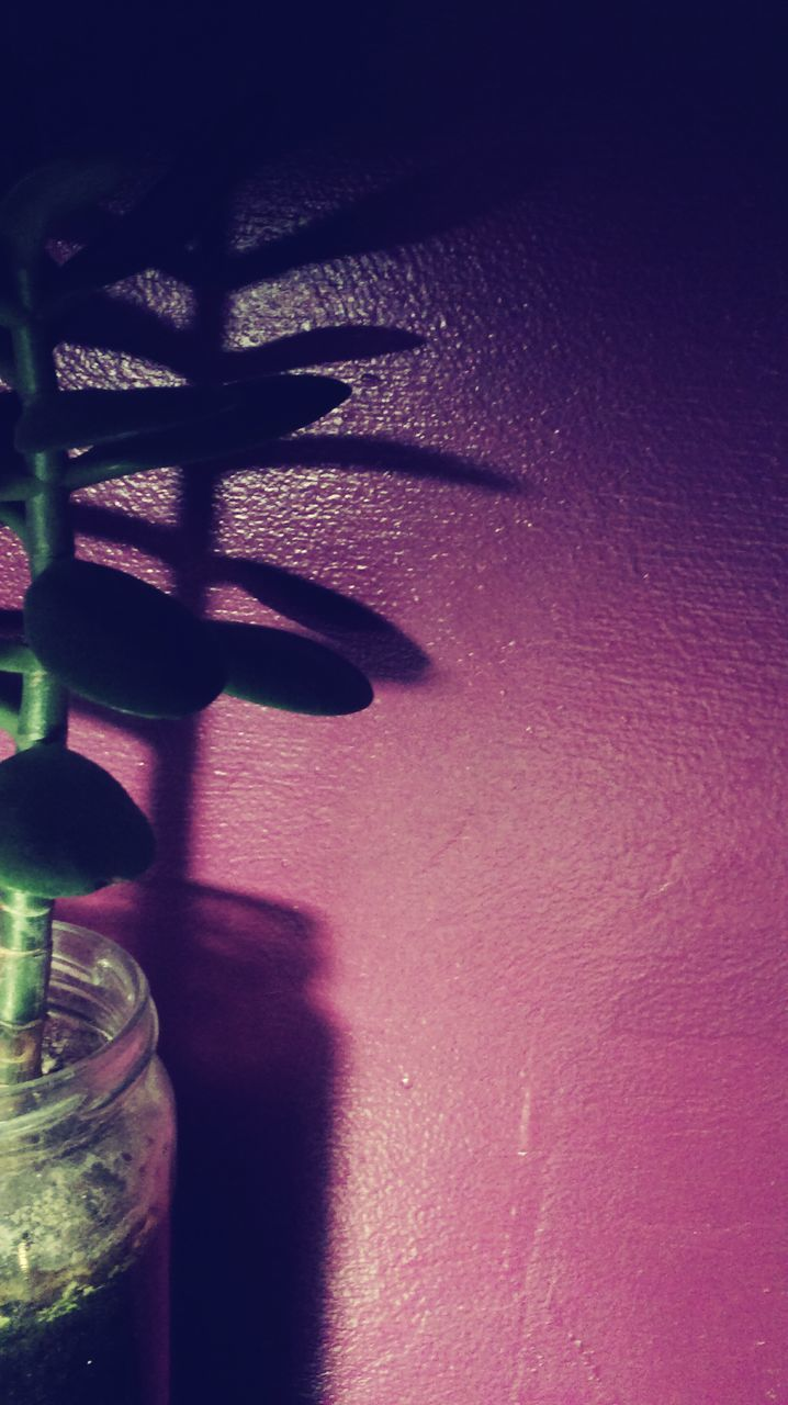 shadow, no people, drink, indoors, alcohol, day, close-up, nature, freshness