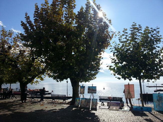 Enjoying The Sun Hugging A Tree People Watching Eye4photography