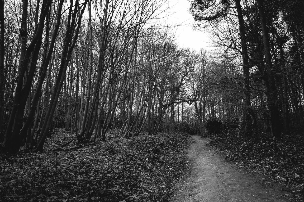 Beauty In Nature Black & White Black And White Day Forest Growth Landscape Lots Of Leaves Monochrome Nature No People Outdoors Scenics The Way Forward Tranquility Tree WoodLand