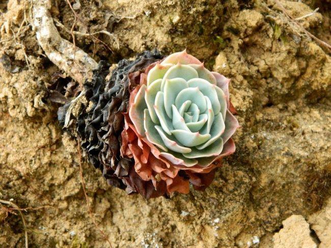 Eye Em Nature Lover Succulents