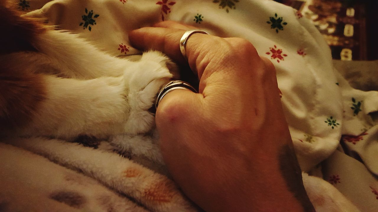 Human Hand Paw Love Connection Cat Pet Animal Soft Touch Loving Relationship Cuddle No Faces Emotion