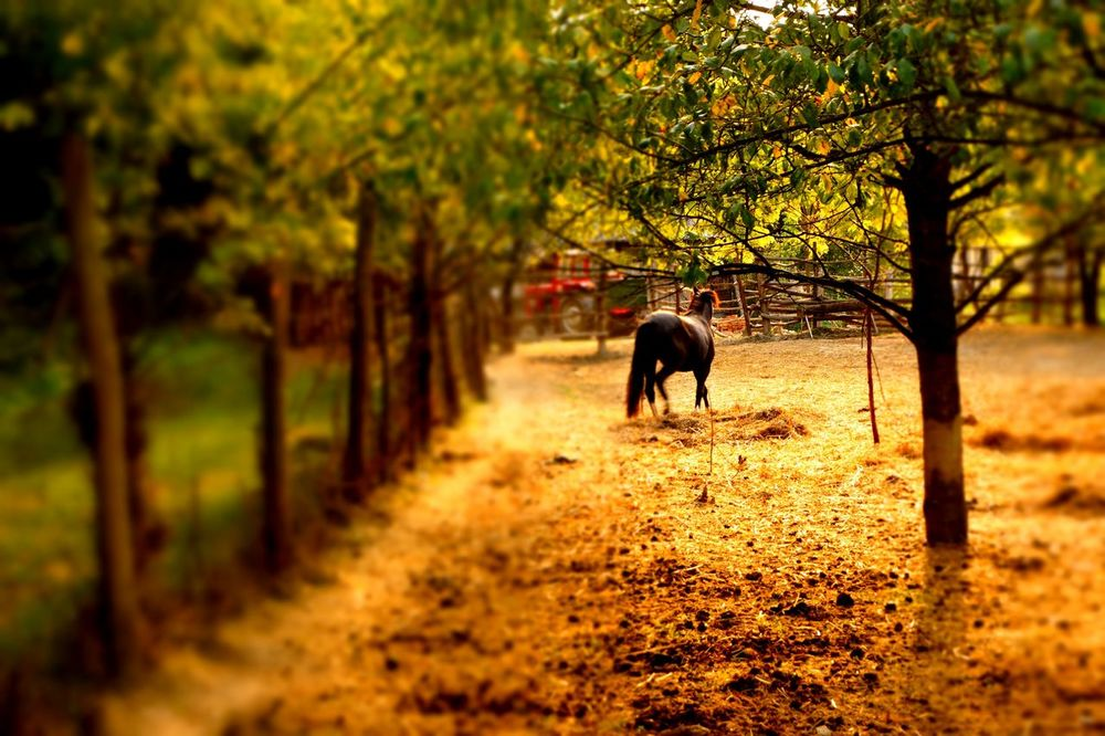 Walking Mammal Tree Nature Animal Themes One Animal Rural Scene Forest Sunset Animals In The Wild Outdoors Animal Wildlife Domestic Animals Beauty In Nature Landscape Scenics Day Full Length Horse Silhouette Autumn Nature Tree Animal No People African Elephant