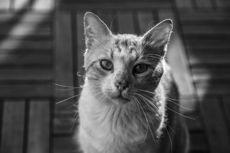 Cat♡ Pets Domestic Cat Domestic Animals Animal One Animal Animal Themes Mammal Portrait Indoors  Feline No People Close-up Day