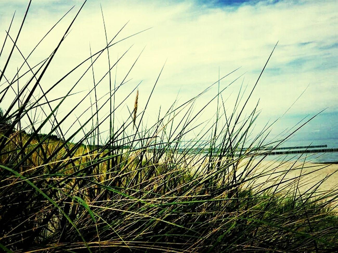 Beach Relaxing Friend