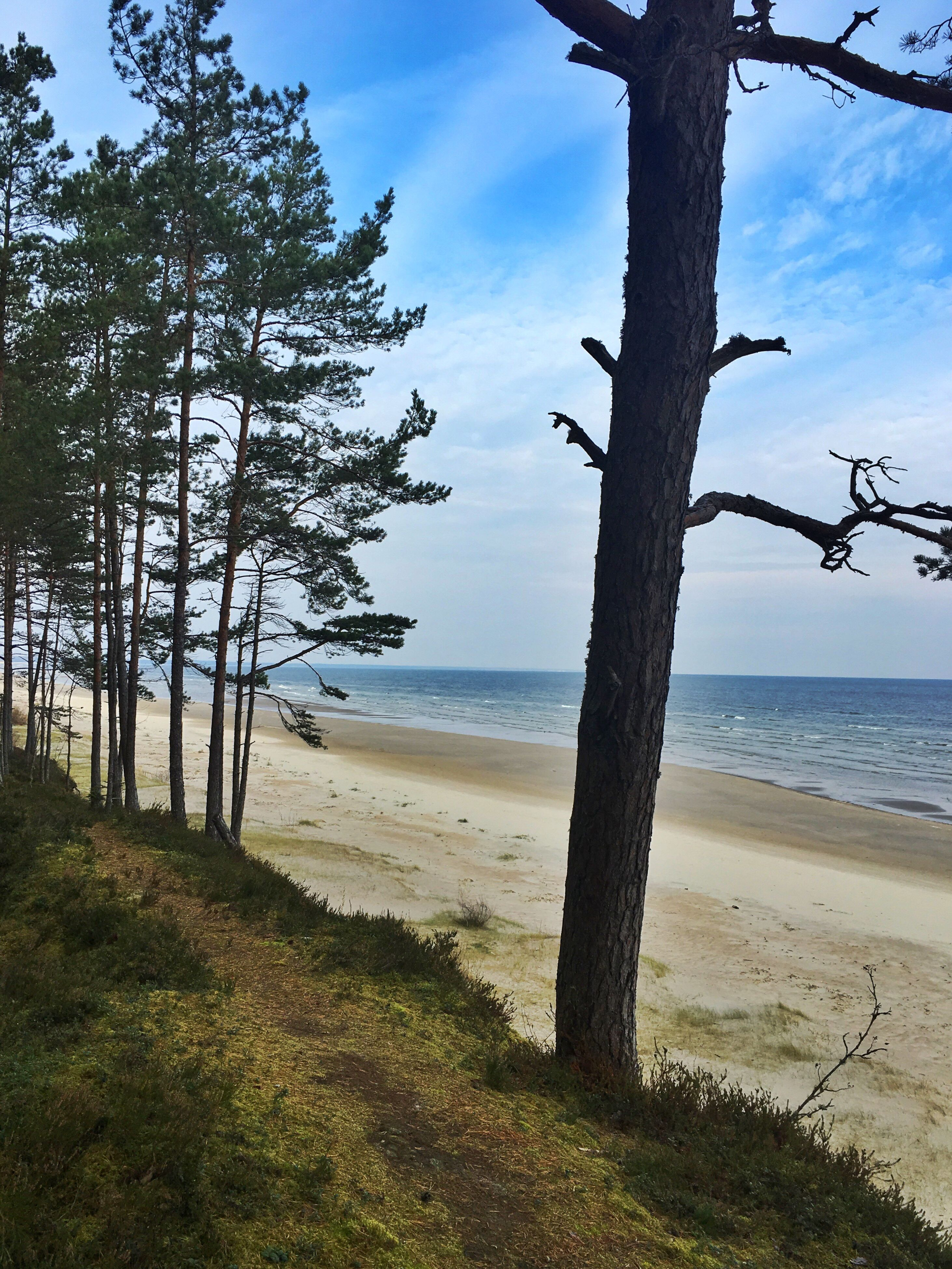 tree, sea, beach, nature, sky, horizon over water, water, beauty in nature, sand, scenics, tranquility, tree trunk, outdoors, growth, no people, day