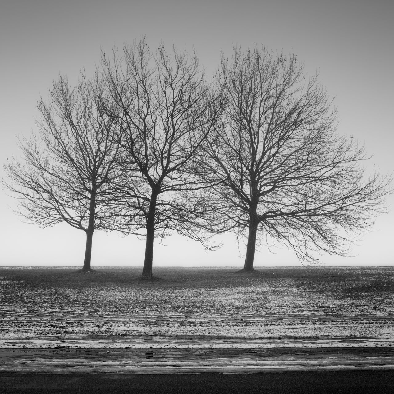 three barren trees on the tempelhofer field in berlin Bare Tree Beach Beauty In Nature Berlin Black And White Day Fine Art Germany Horizon Over Water Landscape Long Exposure Nature No People Outdoors Philipp Dase Scenics Sea Sky Tempelhofer Feld Three Trees Tranquil Scene Tree Water Winter Winter Trees