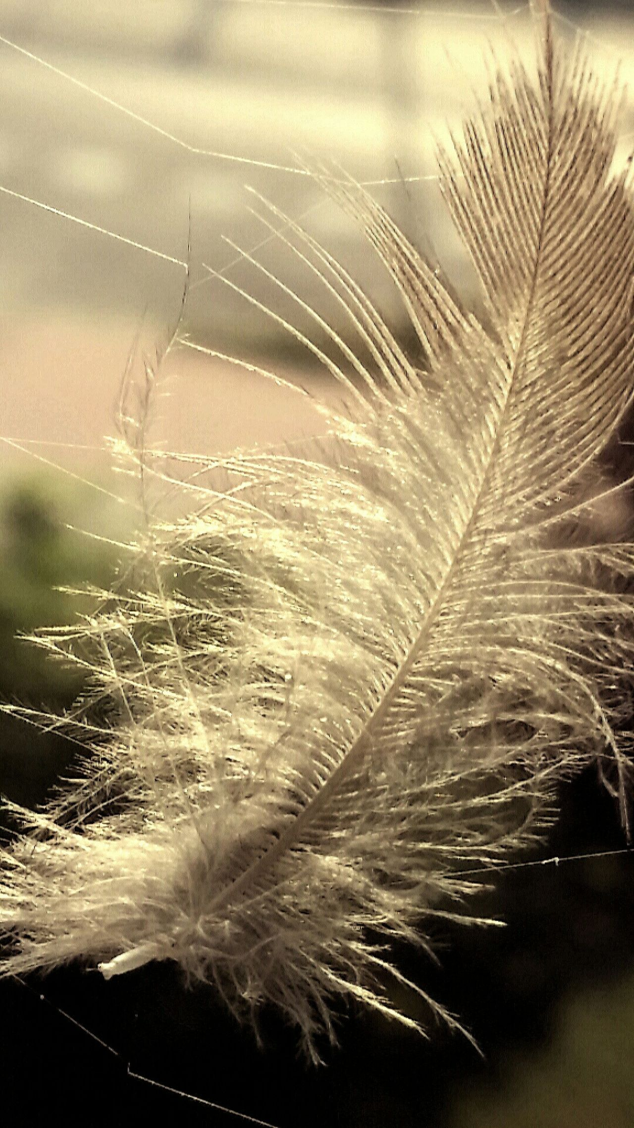 A feather on a spider's web