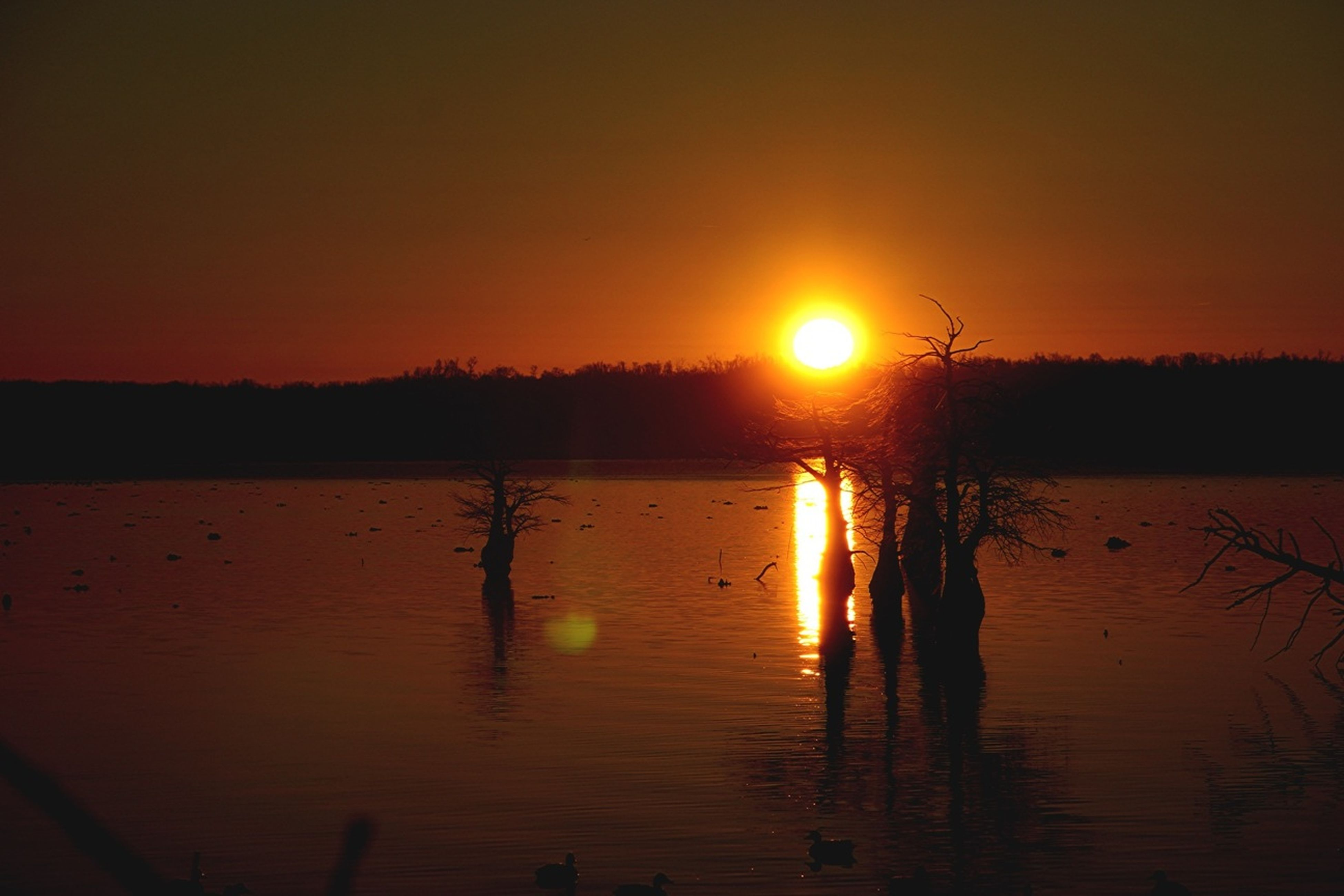 sunset, sun, water, reflection, orange color, tranquil scene, silhouette, scenics, tranquility, beauty in nature, lake, nature, idyllic, sunlight, sky, waterfront, bird, outdoors, non-urban scene, river