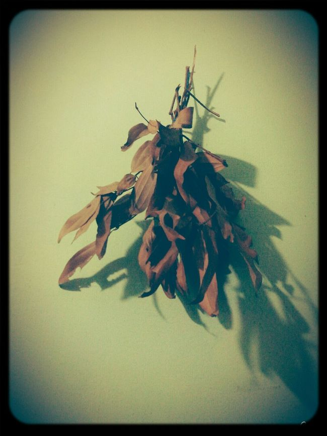 Dry Leaves Shadow Hanging Vintage