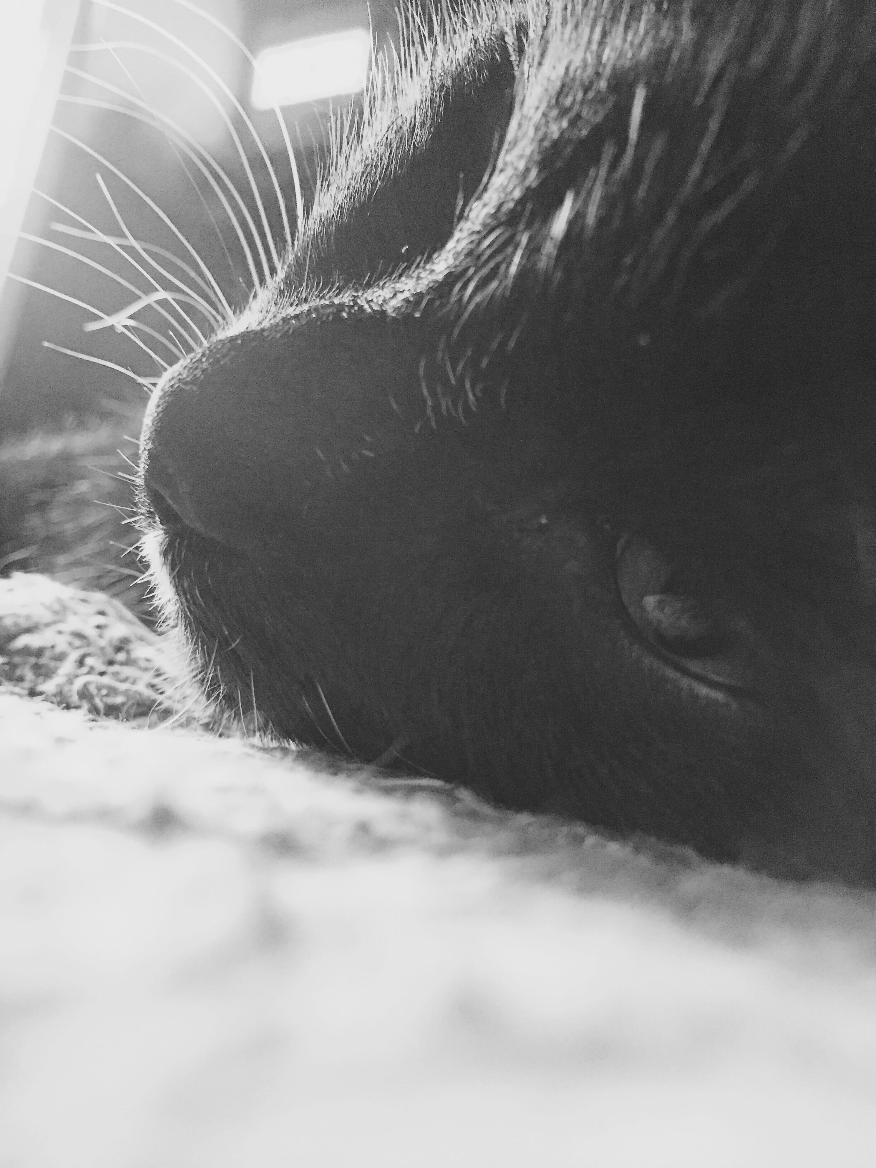domestic animals, indoors, pets, one animal, mammal, relaxation, animal themes, domestic cat, sleeping, bed, cat, close-up, resting, lying down, high angle view, feline, no people, eyes closed, blanket, home interior