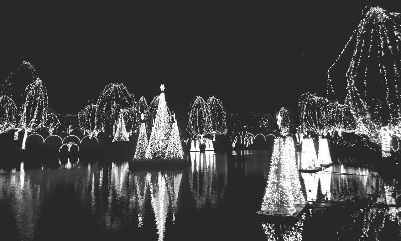 Light Blackandwhite Zoolights  Streetphotography Streetphoto_bw Reflection Water Reflections Enjoying Life Christmas