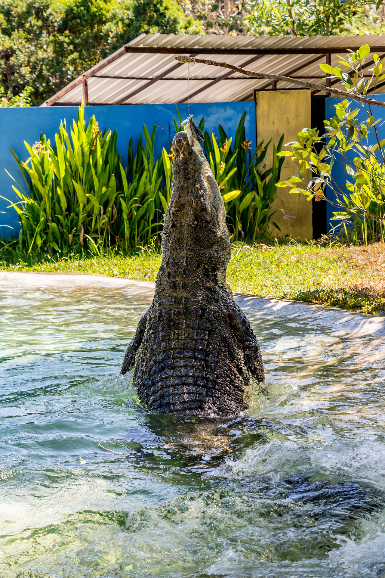 Beautiful stock photos of krokodil, water, shadow, outdoors, no people