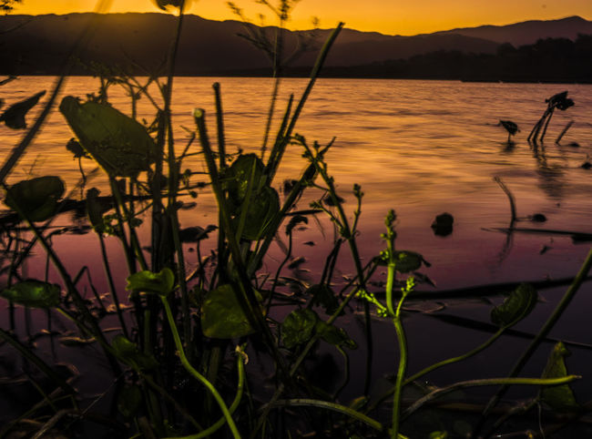 Beauty In Nature Day Floating On Water Flower Growth Lake Leaf Mountain Nature No People Outdoors Plant Reflection Scenics Sky Sunset Tranquil Scene Tranquility Water
