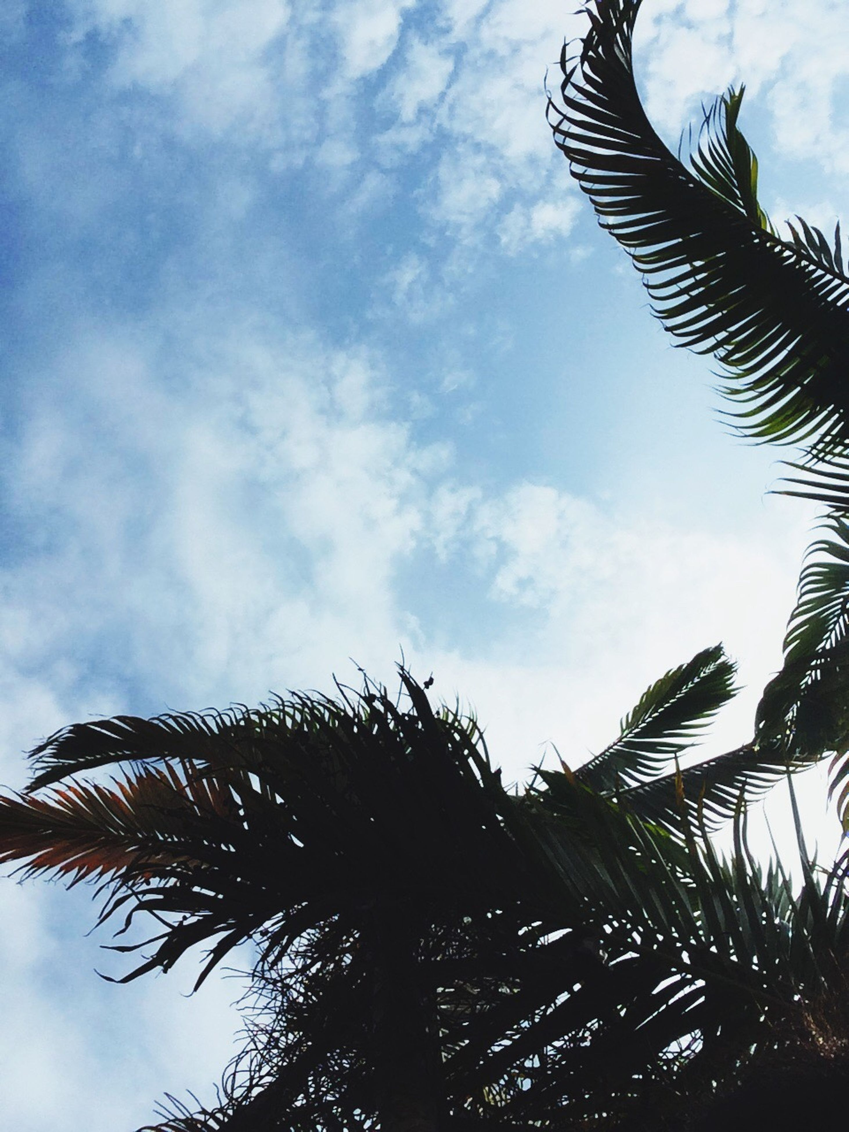 low angle view, tree, sky, palm tree, day, cloud - sky, nature, no people, outdoors, growth, animal themes, beauty in nature, branch