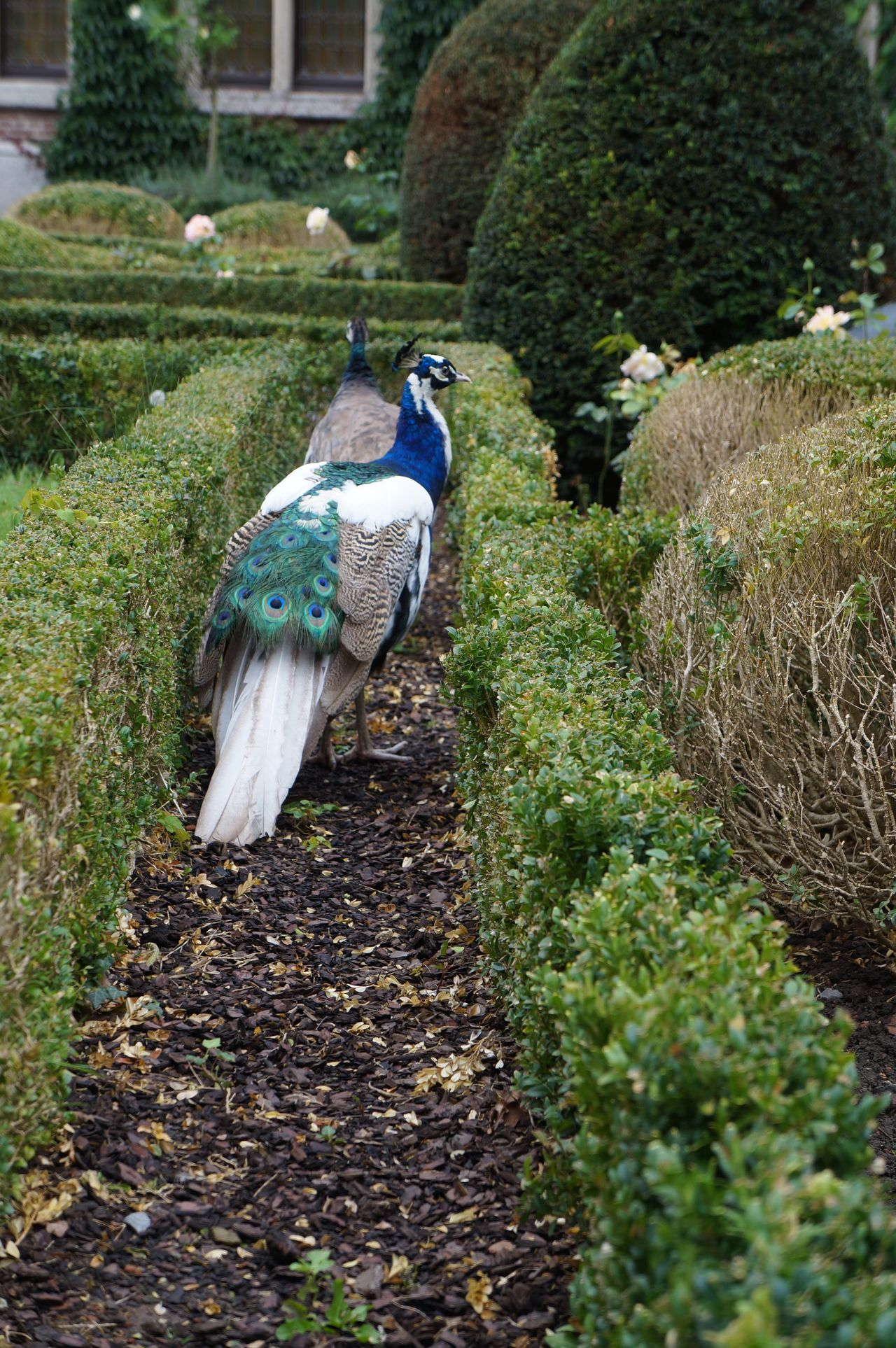 Beautiful stock photos of garden, Bush, Captivity, Day, Facade