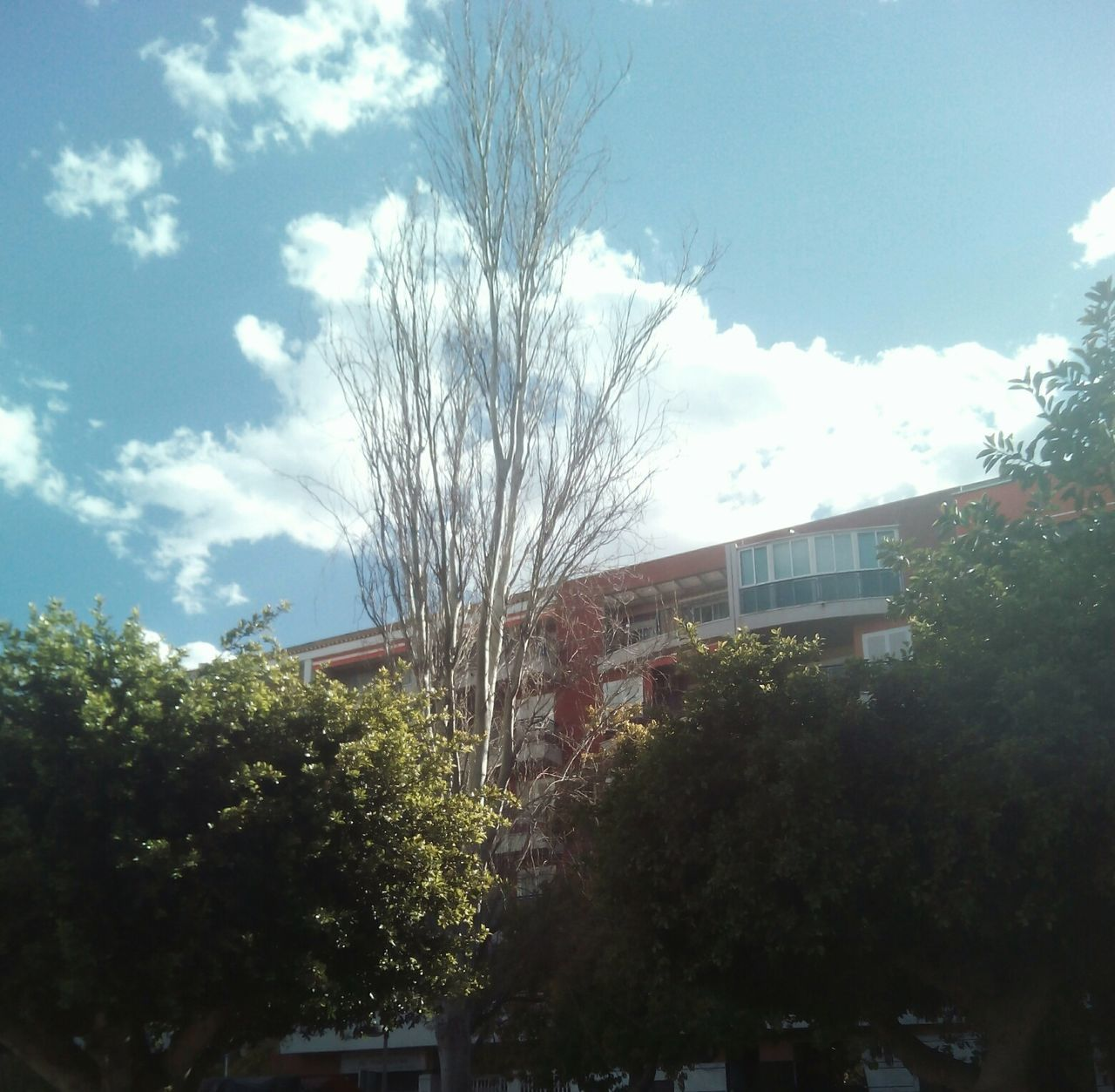 tree, sky, no people, architecture, nature, growth, built structure, outdoors, day, scenery, building exterior, residential, city