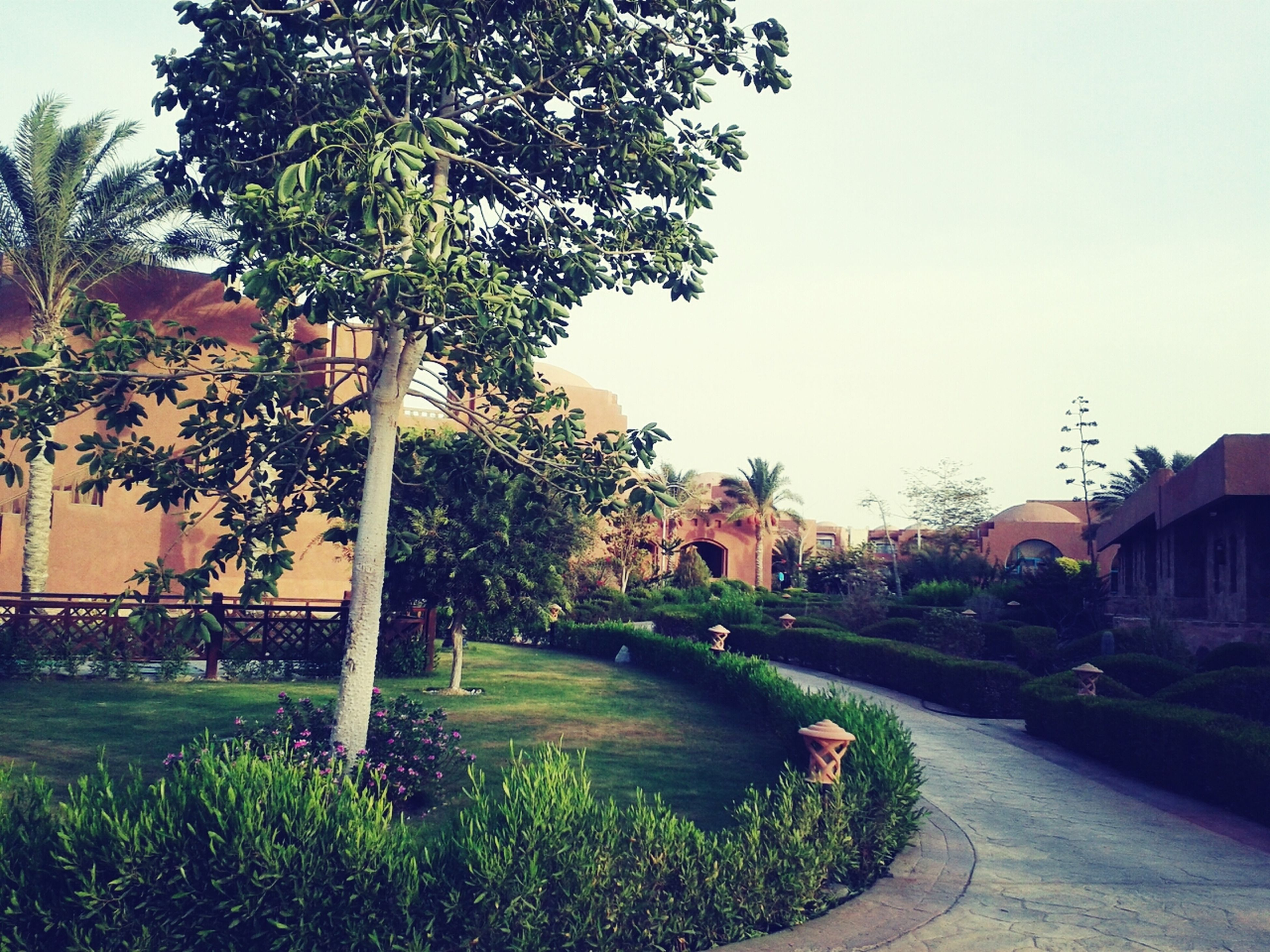 architecture, building exterior, built structure, tree, clear sky, grass, plant, house, growth, lawn, footpath, formal garden, street, city, sky, road, residential building, day, residential structure, outdoors