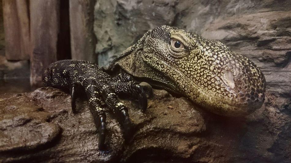 Reptiles Animal Photography Animal Portrait That Eyes Zoology Zoophotography Animals
