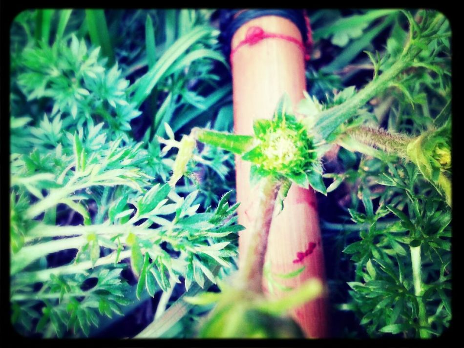 Pic tremenda, weed and pipe. Taking Photos Hanging OutNative @GalaxySIIIMini