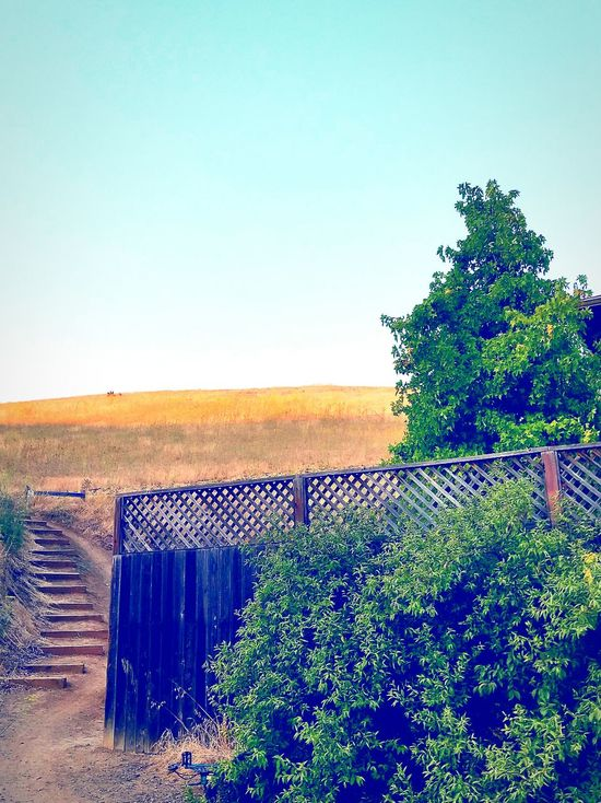 Stairway Clear Sky Green Color Bayareaphotography Built Structure Running On Empty What If I Cant Fix This Anymore.. Stairs Stairways Solitude Stair end of bike trail From My Point Of View Clearly A Clear View On The Road Again Lucky Shot what if i cant fix this anymore