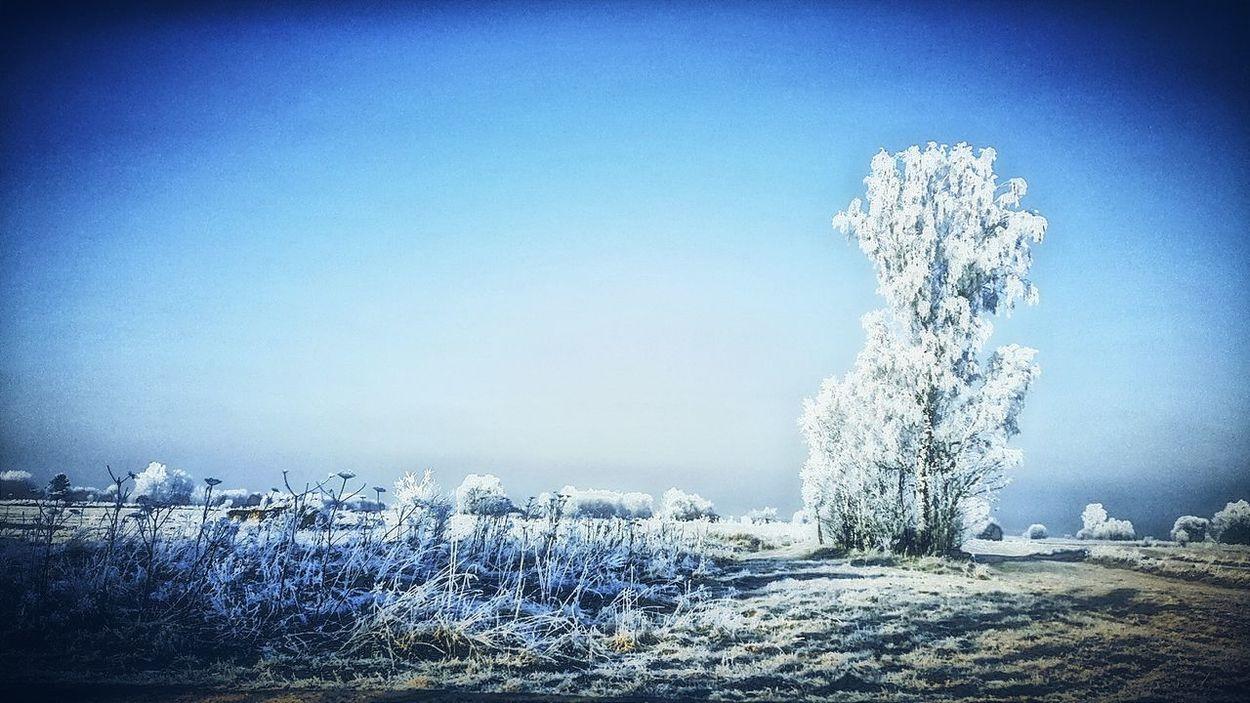 Winter Wintertime Winterwonderland Winter Wonderland Winterscapes Winter Trees Winter Landscape It's Cold Outside