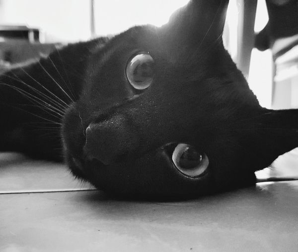 Cats Of EyeEm Indoors  Domestic Cat Pets Portrait Picoftheday Black Cat Day Close-up Low Section One Animal Samsung Galaxy S7 Edge Black Color AdultAnimal Themes Mysweet Hot Temperature Black And White Tranquil Scene Likeapanter Cat Eyes Watching You Cat Eyes