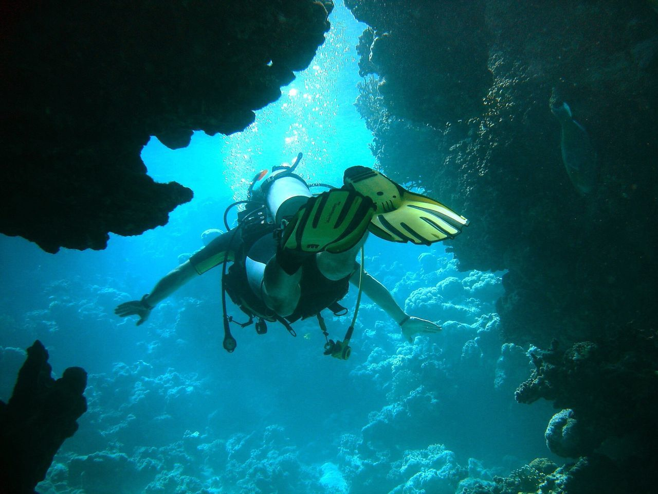 Beautiful stock photos of underwater, 45-49 Years, Adventure, Bubble, Coral