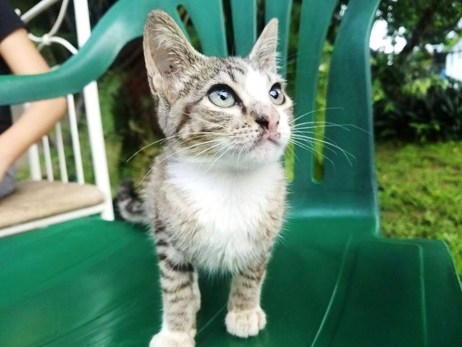 Beautiful stock photos of puerto rico, Animal Themes, Chair, Close-Up, Day