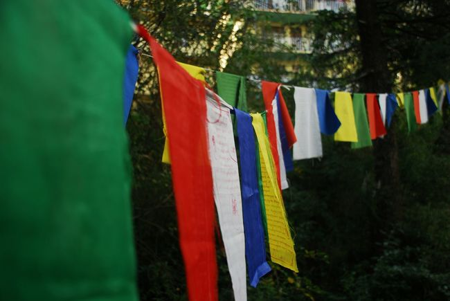 Tibetan flags, carrying prayers of peace for the world Ahimsa  Blue Buddhism Close-up Colorful Culture Day Fabric Flags Focus On Foreground Green Color Multi Colored Nature Outdoors Peace Prayer Prayer Flags  Red Sky Spirituality Textile Tibetan  White World Peace Yellow