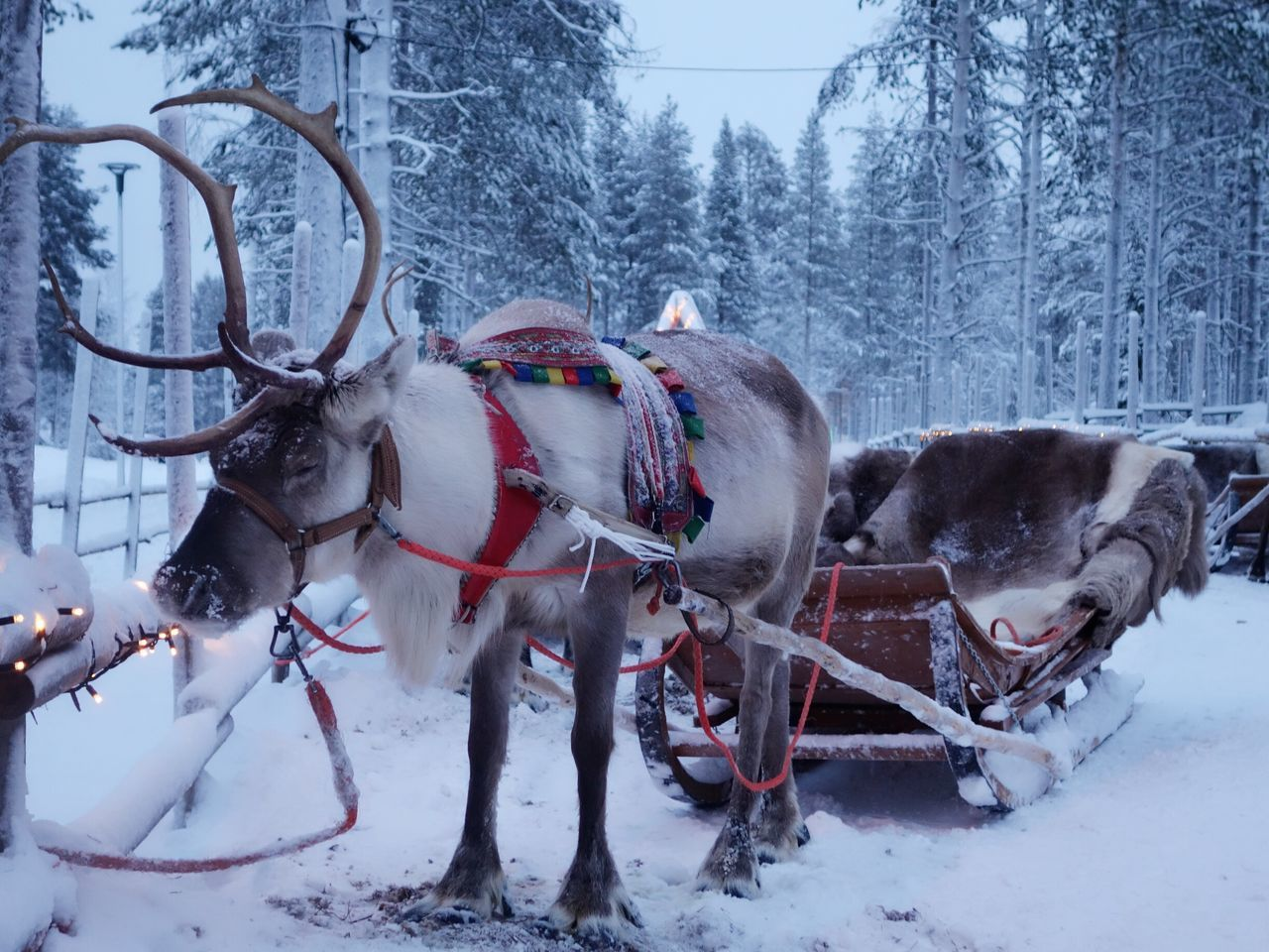 Beautiful stock photos of weihnachtsmann,  Animal Themes,  Cold Temperature,  Day,  Domestic Animals