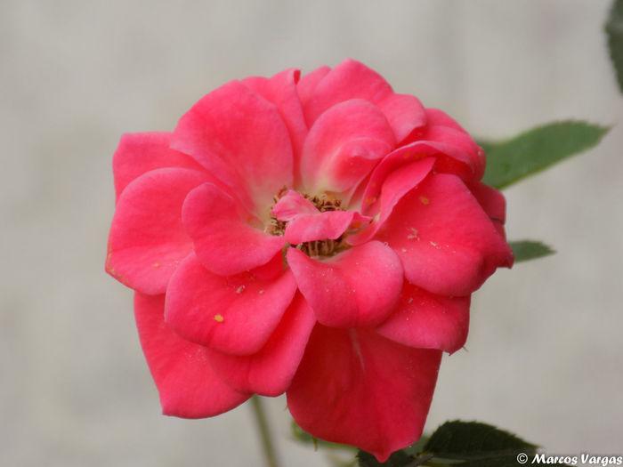 my house Tropical Flowers🌺 Beaty Flower Flower My Garden Beauty In Nature
