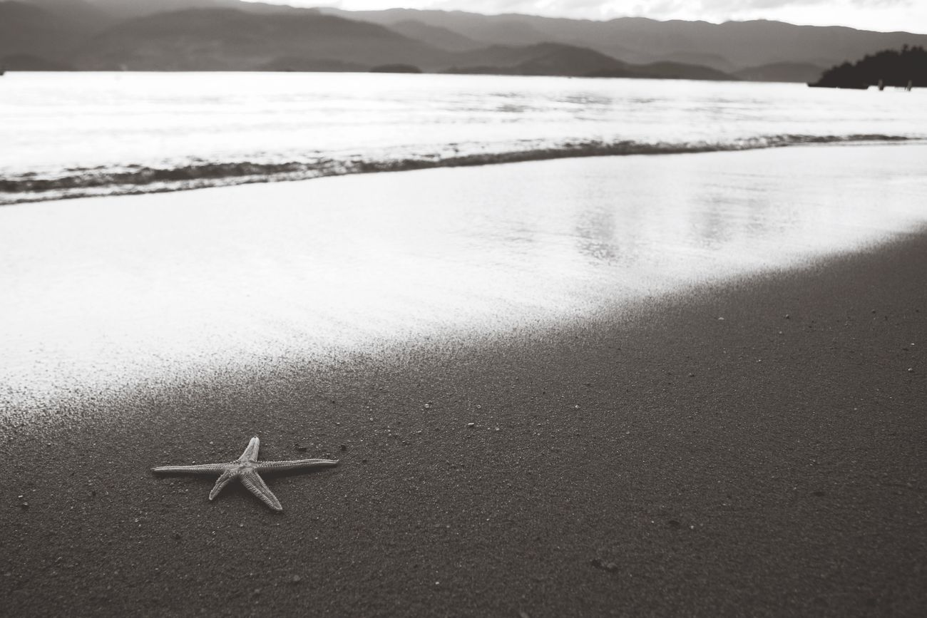 Paraty Brazil starfish relaxing on the beach Brazil