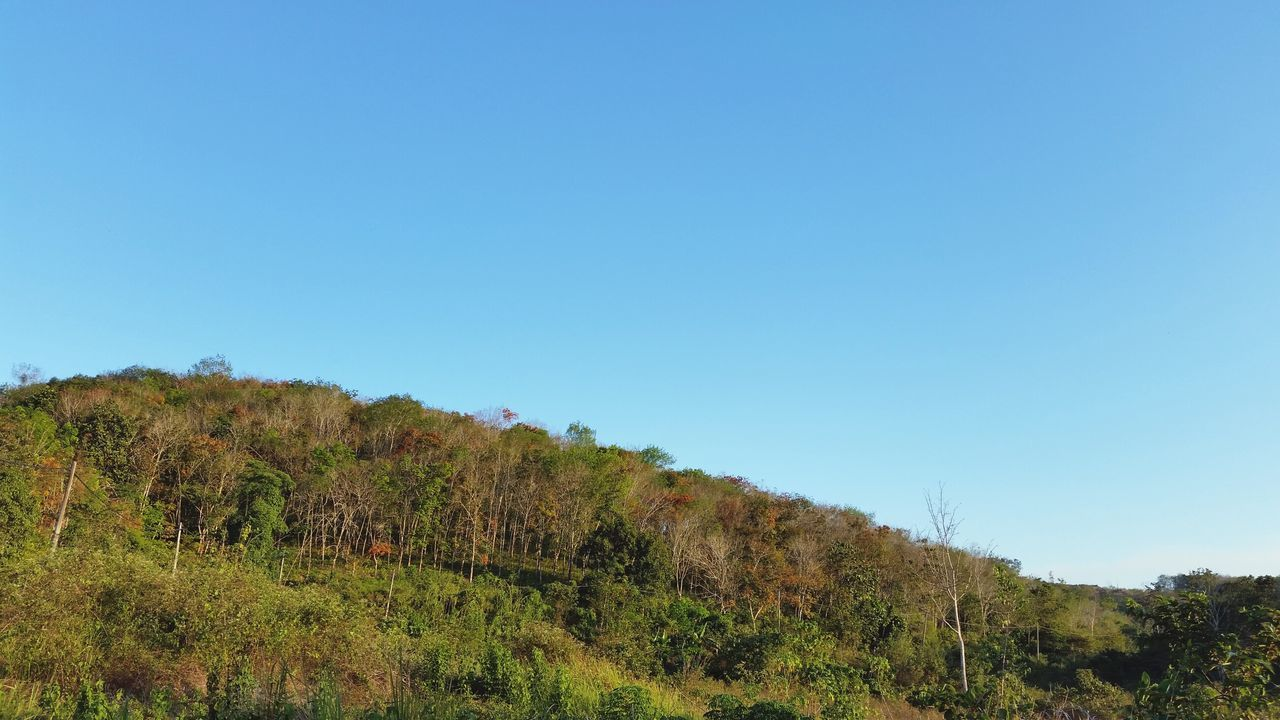 at the Rubber Plantation today. Rubber Tree Nature Blue Sky Blue And Green Softness Calmness - Borneo