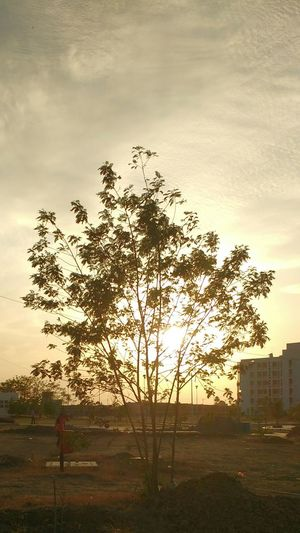 Tree Sun Sun Behind The Tree Bright Showcase April My Favorite Photo the golden sun!!