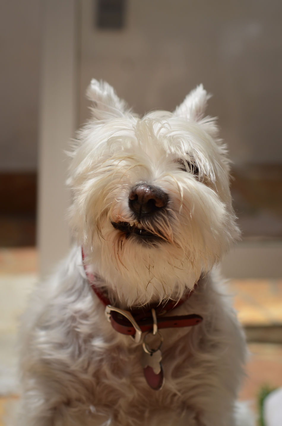 Lovely day wtih my princess Wink, wink Animal Themes Day Dog Domestic Animals Mammal No People One Animal Outdoors Pet Clothing Pets Portrait Terrier West Highland White Terrier Wink Wink Wink ;)