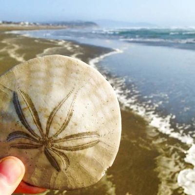 Beach Beauty In Nature Close-up Day Focus On Foreground Holding Human Hand Nature Ocean Beach One Person Outdoors People Real People Sand Sand Dollar Sea Sea And Sky Sea Life Shells Sky Water