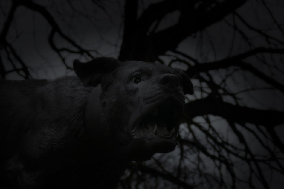 Angry Dog Bad Dream  Black & White Curiosity Dark Photograph Dark Photography Darkart Darkness Dog Dog I The Night Dog In Nightmare Dogattack Eyem Forest Night Forest Nightmare Horror Photography Mental933 Mystical Atmosphere Night Lights Nightmare Scarry Scary Scary Dog Scary Face