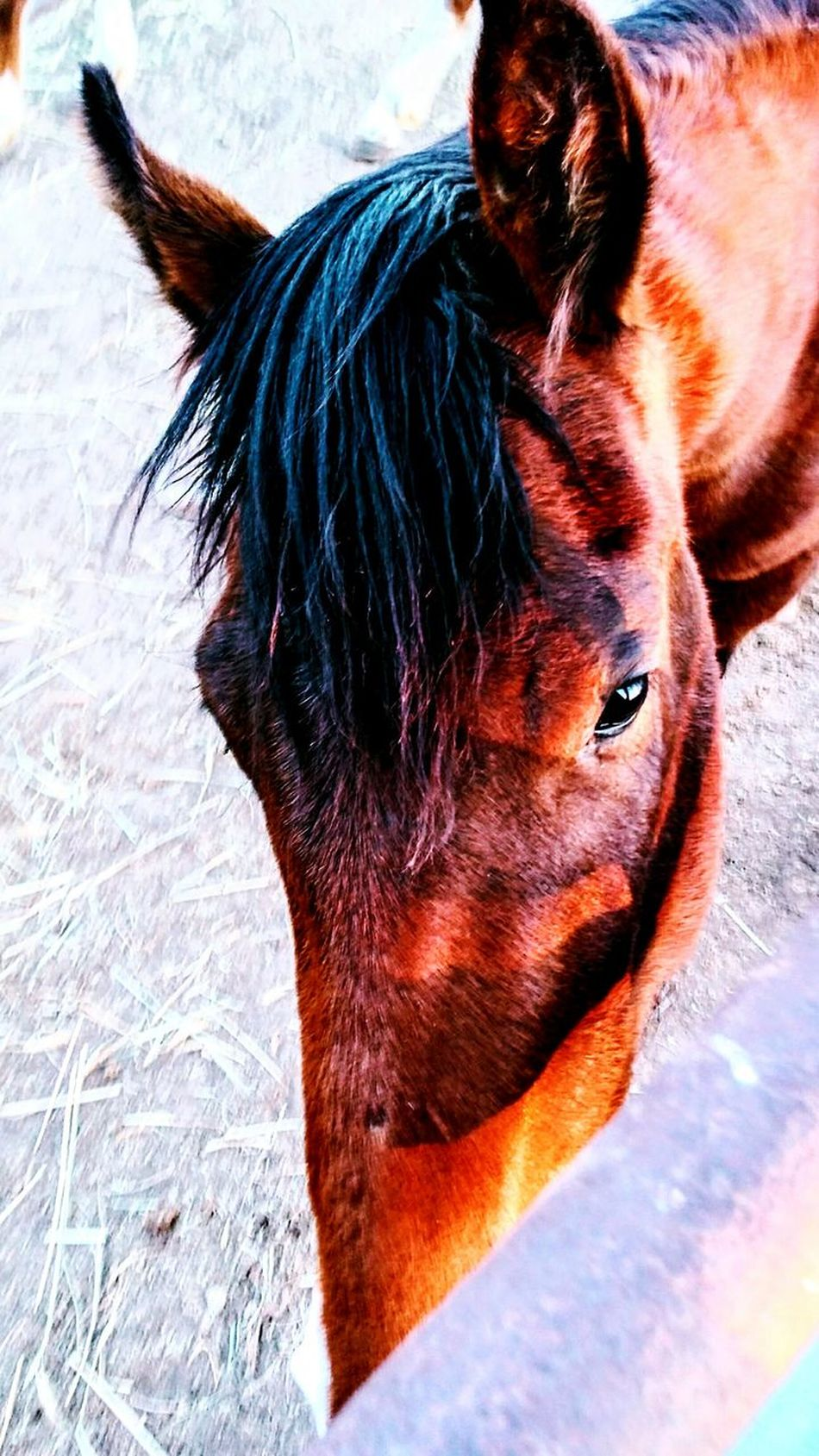Ranch horses Domestic Animals Animal Themes One Animal Mammal Close-up No People Day Outdoors Filly Pasture, Paddock, Grassland, Pastureland Color Portrait Country Living Ranch Barn Ranch Life Farm Cowboy Country Life Mane Working Animal Horse Stable Livestock Sunlight Nature