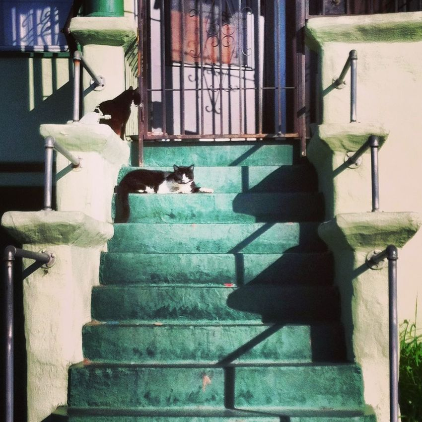 Cats Cats Of EyeEm Green Color Guard Cat Handrails Morning Light Peeling Paint Shadows Stairs & Shadows Wrought Iron First Eyeem Photo