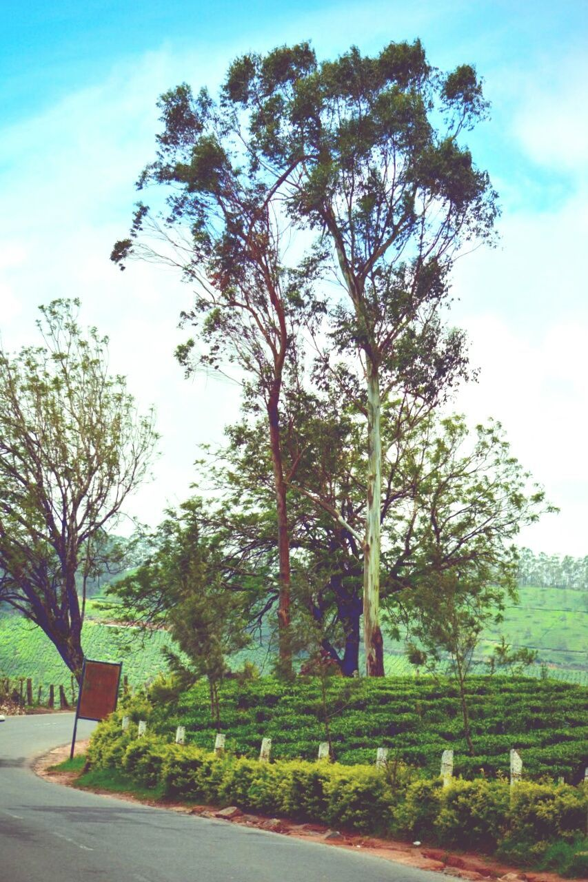 tree, nature, growth, sky, road, outdoors, day, tranquility, no people, landscape, scenics, beauty in nature