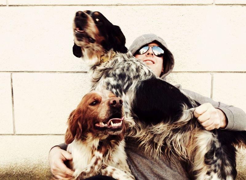 Playing With The Animals Setter English Setter I Love My Dog Italy Reggioemilia