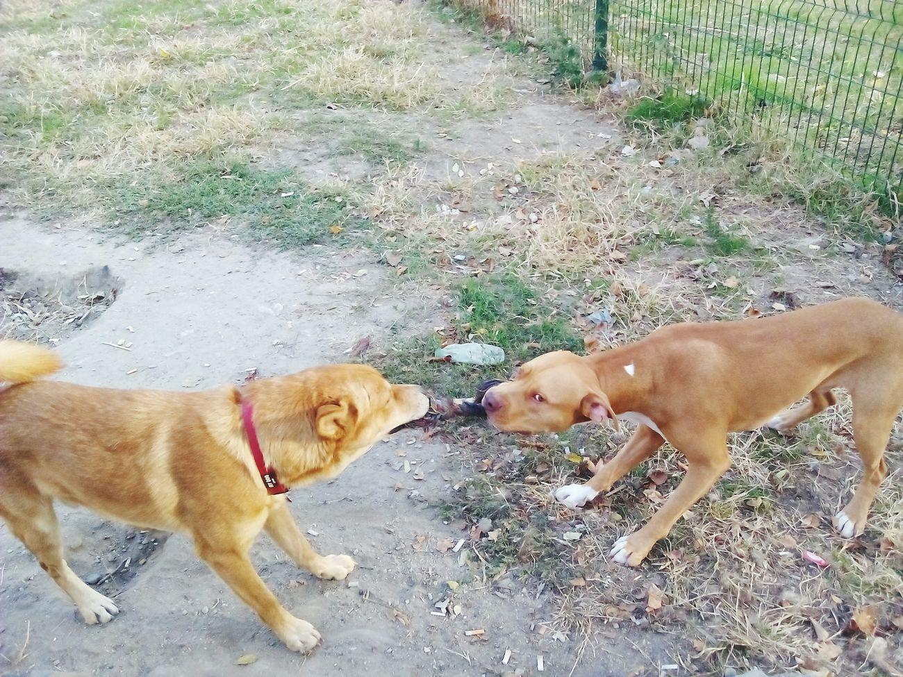 Верни приятели. Dog Pets Domestic Animals Animal Themes Day Togetherness Outdoors Mammal Bonding Friendship Low Section People Adult