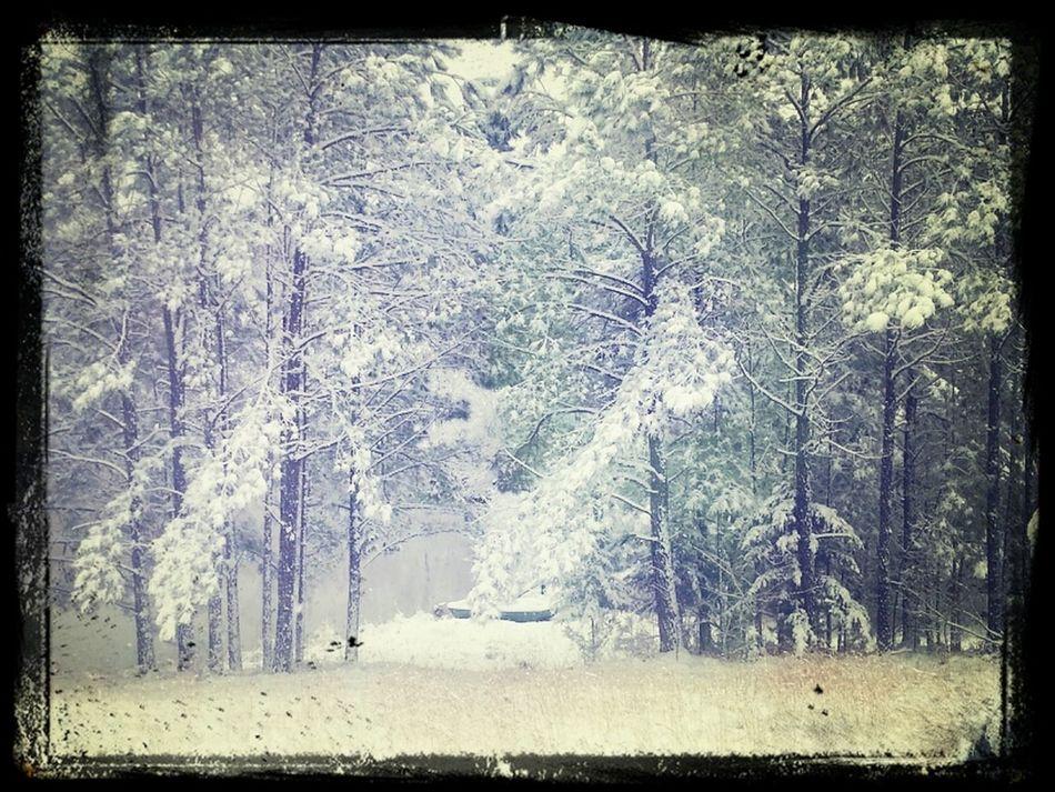 Lovin snappin pics of the melting snow... :)