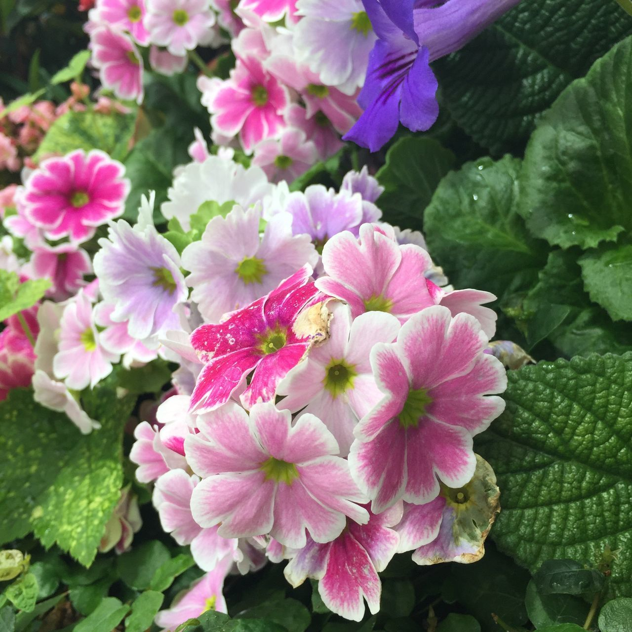 Pastel colors! Flower Fragility Freshness Petal Nature Growth Beauty In Nature Pink Color Flower Head Plant Close-up Blooming No People Day Outdoors