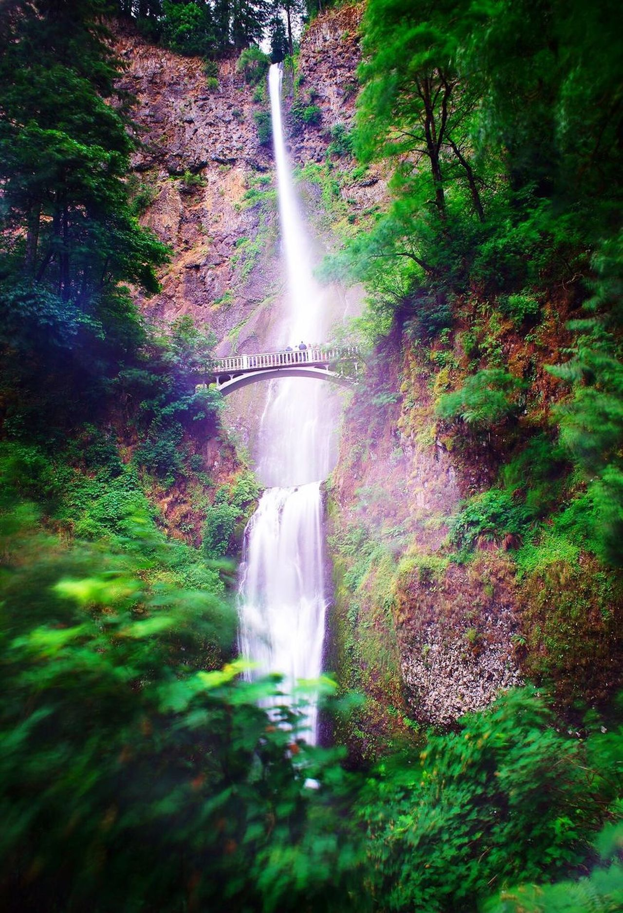 Multnomah Falls  Waterfall Nature Beauty In Nature Green Color Lush Foliage Growth Scenics Forest Rear View Outdoors Day Real People Grass One Person Tree Freshness